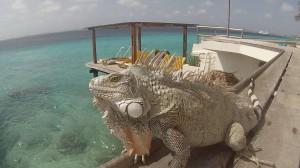 Bonaire13