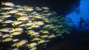 Malediven04