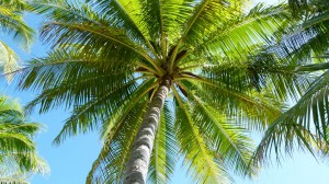 Polynesien58