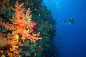 Korallenriff mit Taucher|Thomas Reich, www.scubavision.de